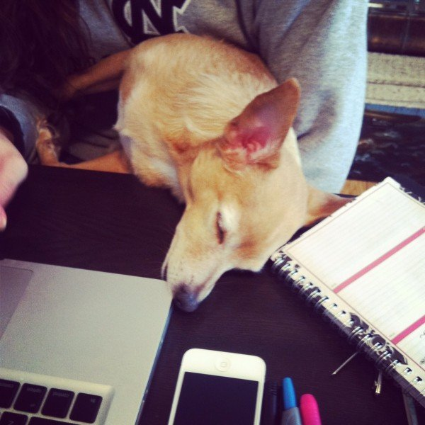 My dog Mani's favorite way of dealing with my nonstop working habits.